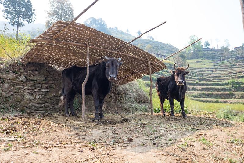 Nepal 129(20150412-DSCF1891)