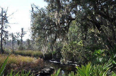 seaton creek.jpg