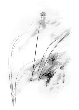 Black and White/Sepia