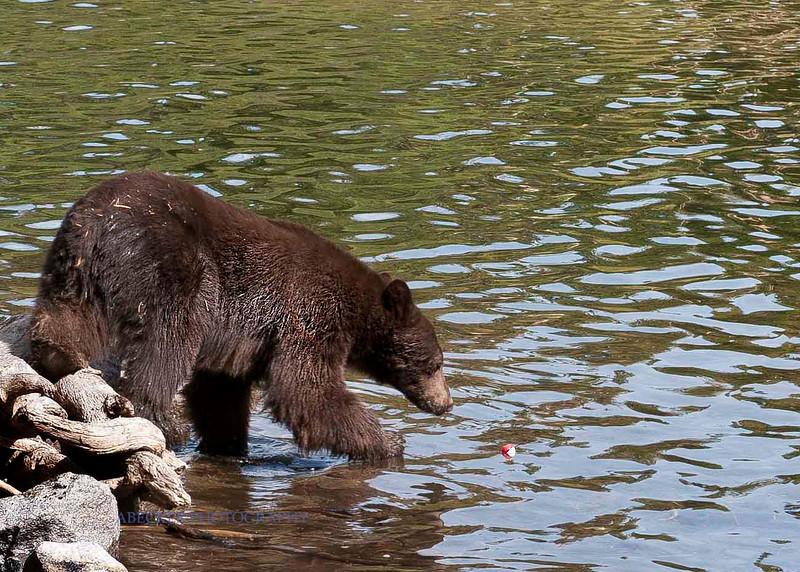 A Bear 2.jpg