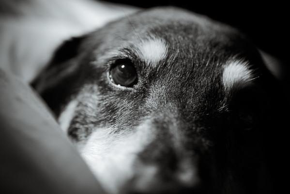 Xena - My Dog