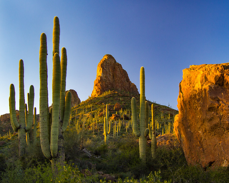 View of the desert along Apache Trail, near Bronco Butte
