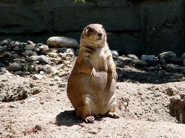 Zoo Boise: 2007-2011