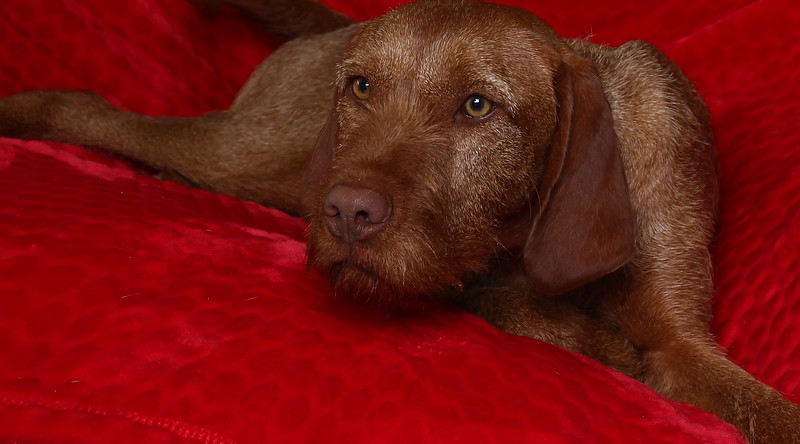 saule-dog-6.jpg