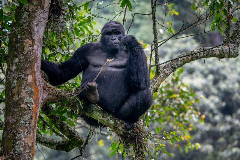Uganda_T_Gor-2706.jpg