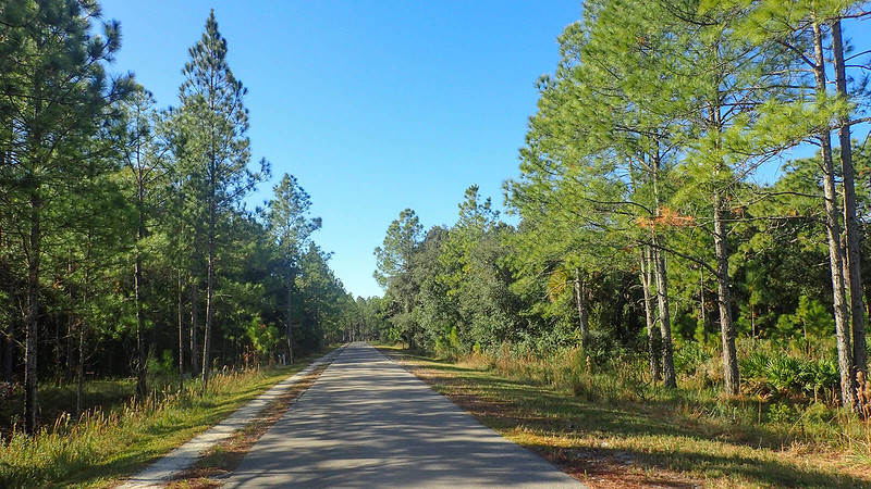 Straight paved corridor through pines