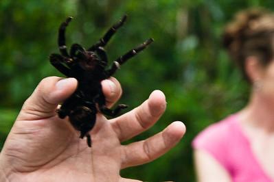 tarantula-at-tikal_4583555411_o.jpg