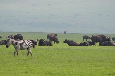 1494239974African-Safari-45.jpg