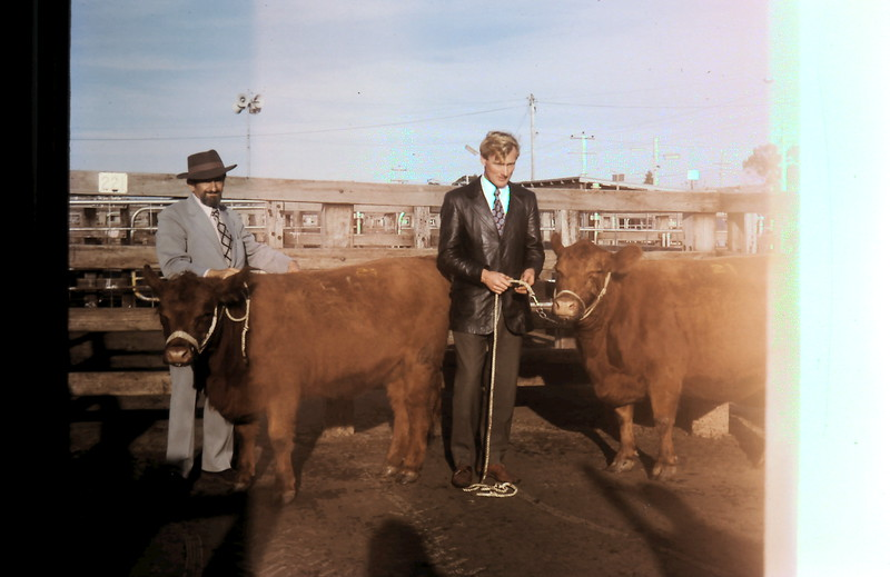 1974-5 (36) Mr Grosby & Graham @ Red Angus Show.JPG