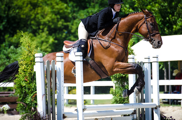 Hunter Jumper portfolio