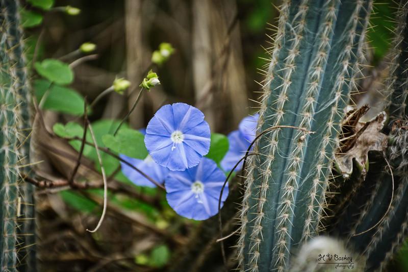 STJohn_Flowers.jpg