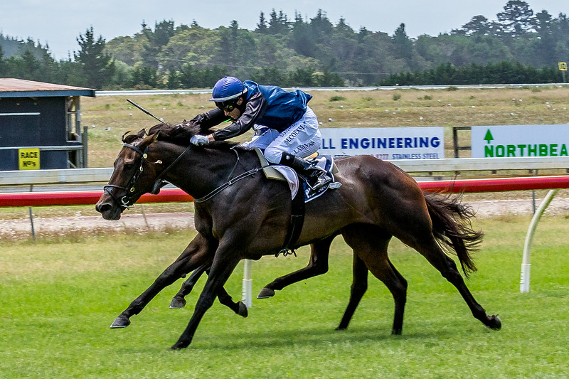 Summer Festival at the Ruakaka Race Course: Wieviele Beine hat ein Pferd?