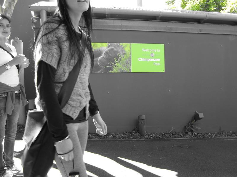 Sydney - Sydeny Zoo-34.JPG