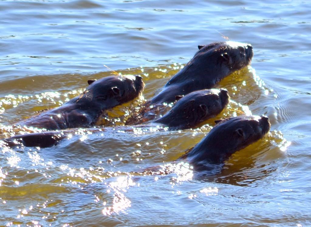 . Taking a swim. (Courtesy of Krist Jensen)