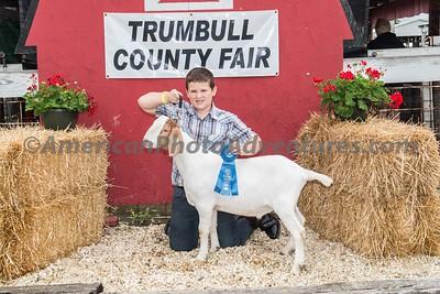 July 15 Market Meat Goat Judging