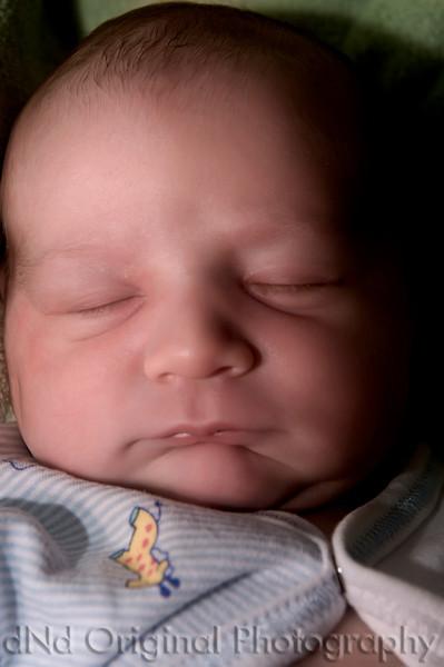 027 Declan 1 day Old (55mm halo).jpg