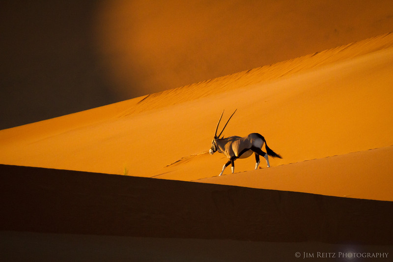 Oryx in Namib-Naukluft National Park, Namibia.