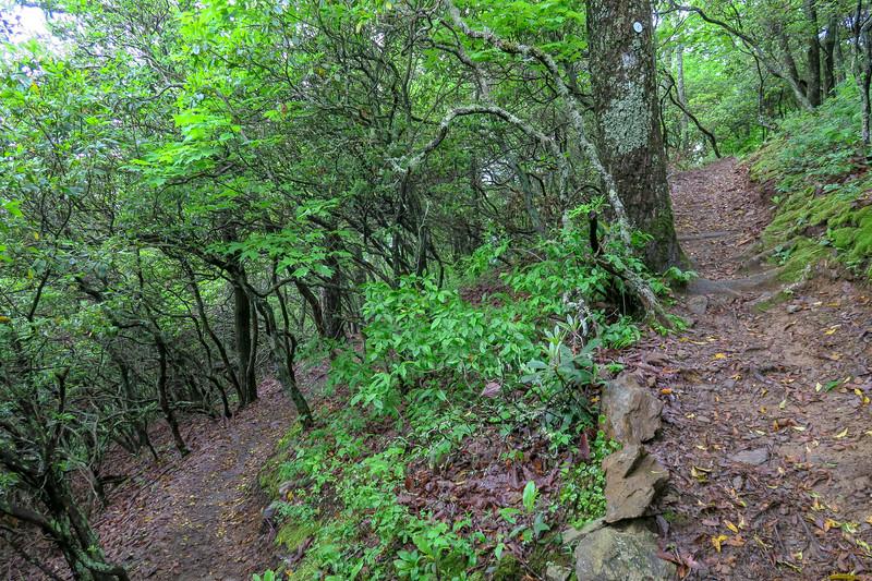 Mountains-to-Sea Trail -- 3,100'
