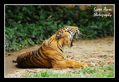 20060319 - Zoo Negara Outing