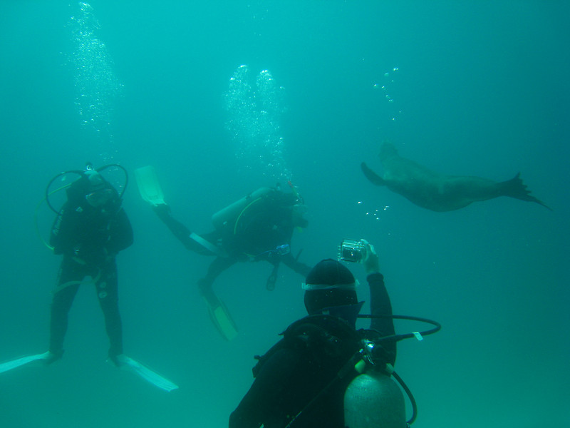 Diving in the Galapagos (120 of 392)