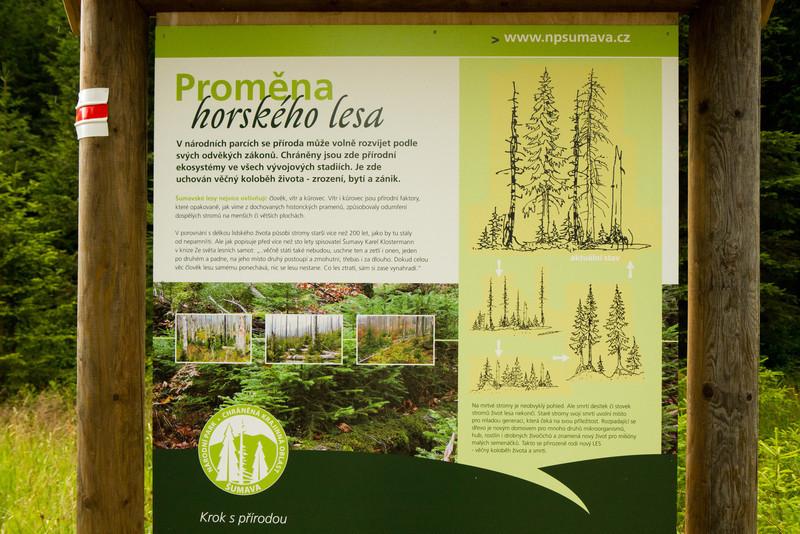 O přirozené obnově lesa - vždyť je to tak jasné a jednoduché, proč to ti páni nahoře nechápou? Divím se, že ti dřevorubci nepokáceli i tuto ceduli.