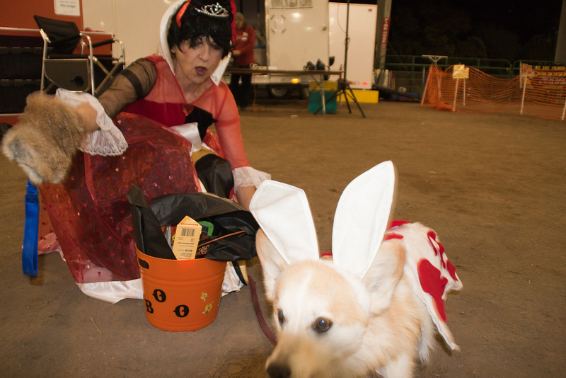 Queen of Hearts and the White Rabbit (Loni)