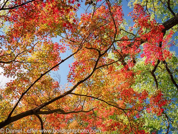 North Texas Fall Color 2020