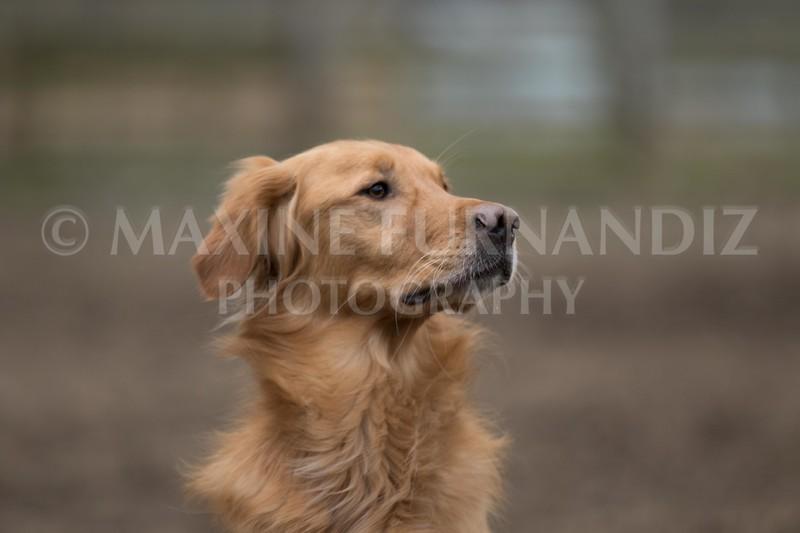 Dogs-5751.jpg