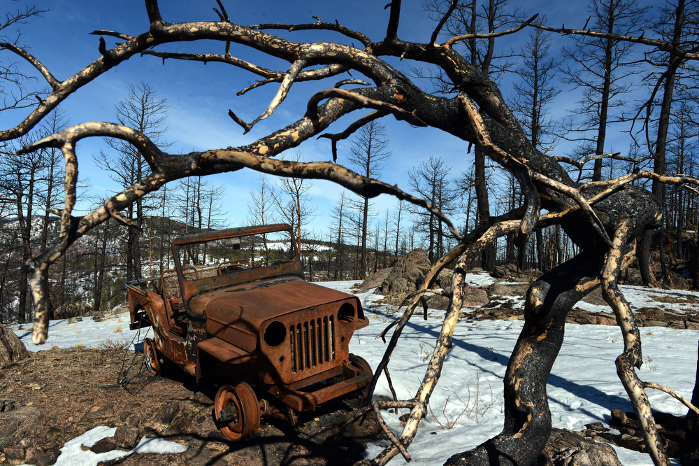 . The remains of a 1953 Willys Jeep rest on Scott Appel\'s property that was destroyed in the Lower North Fork fire last year, in Unincorporated Jefferson County, CO March 14, 2013. Appel\'s wife, Ann, is one of three people that died in the fire that destroyed 27 homes. Appel is among nearly 100 people who have made claims for damages against the state.  (Photo By Craig F. Walker/The Denver Post)