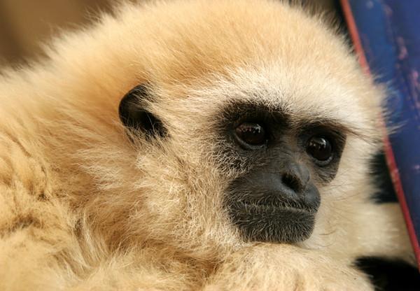 monkey one.jpg