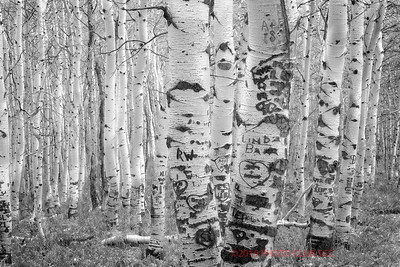 PRINT-MONO-ADVANCED-GOLD-SWEETHEART FOREST-BRUNO GRAZIANO