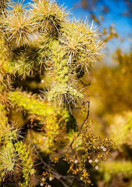 Arizona_090617_1040.jpg