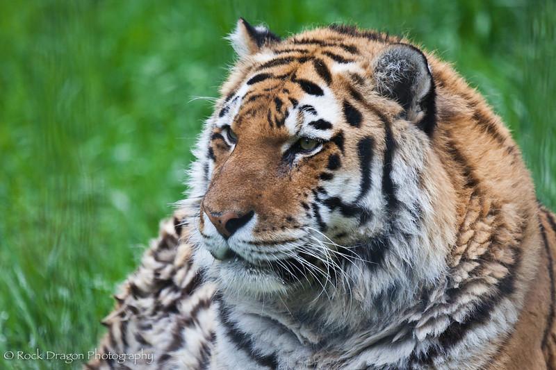 zoo_june4-9.jpg