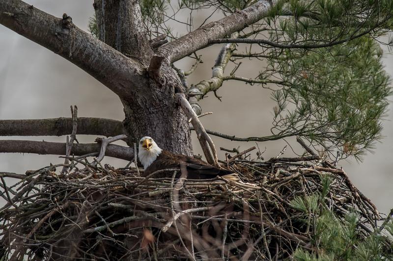 ulster-eagle-180.jpg