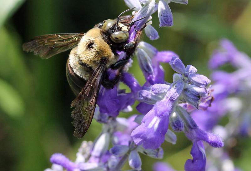 Bumble bee 27