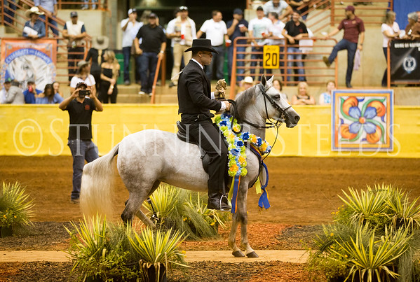 Fino Mares Filly Championship