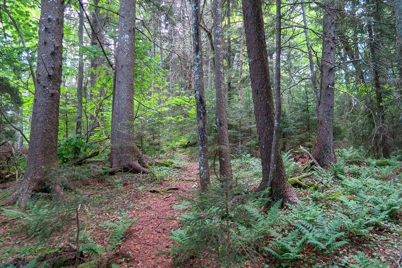 Green Mountain Trail -- 5,270'