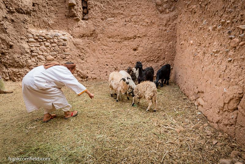 Mustapha in Tamnougalt