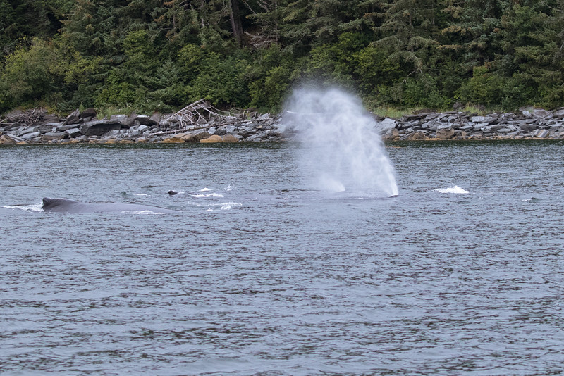 Alaska 2015 - Juneau -  072615-120.jpg