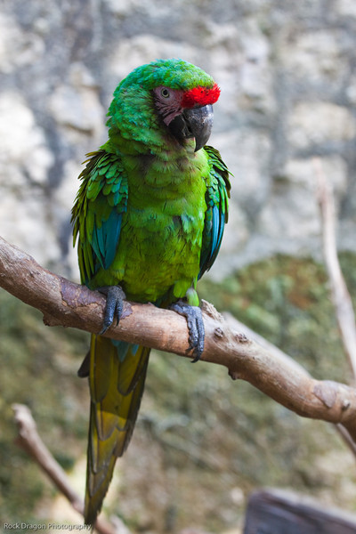 A parrot at the Xcaret Ecological park.
