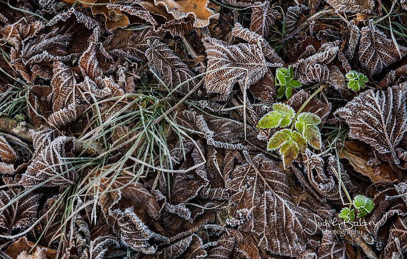 Slovenian frost