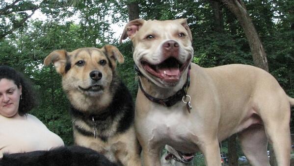 PICS JUNE 17::Lucy (pitbull), Maddie
