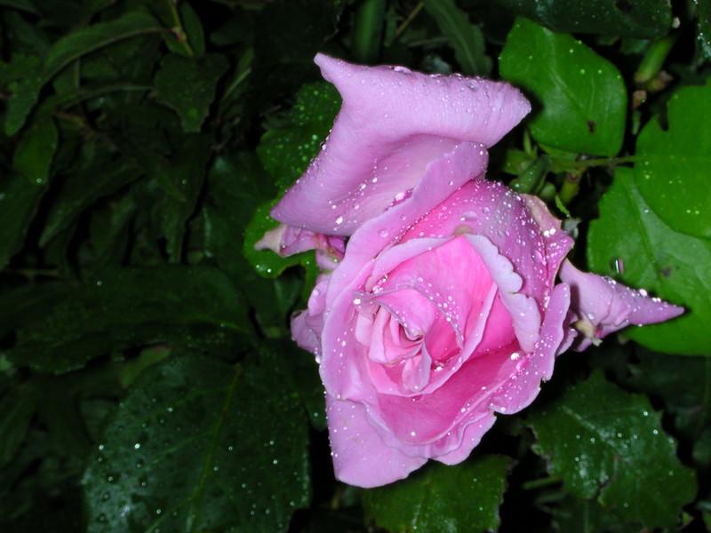 flowers70.JPG