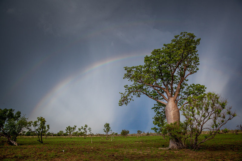 Double rainbow over a boab tree (Storm Chasing in Northern Australia for BBC Wonders of The Monsoon.)