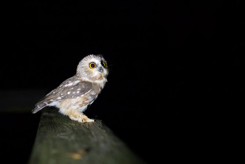 CIK-181012-Owls-API_6555.jpg