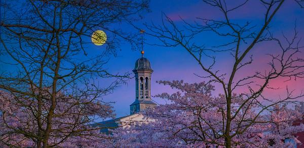 Fine Art natuur foto van de Sint-Lambertuskerk te Nistelrode in de lente met de kersenbloesems van de Lambertushof bij maanlicht.