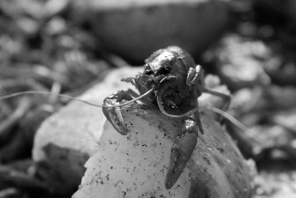 Crawfish Boil 2014