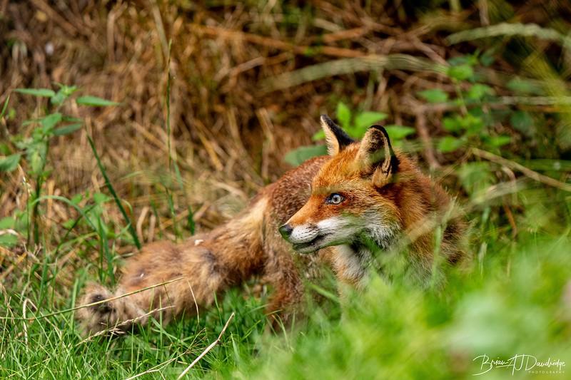 British Wildlife Centre_D850-0032.jpg