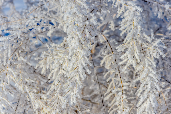 1-09-15 Macro - Frost