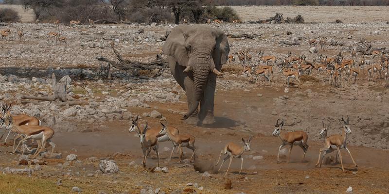 Namibia 69A7894.jpg